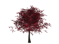 tree-1586365_960_720.png